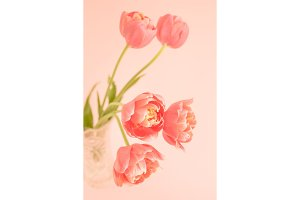 Five peony flowering tulips.