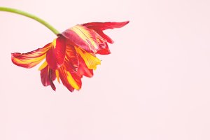 Minimal background with flower.