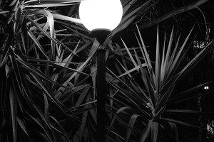 Street Light Plants Night