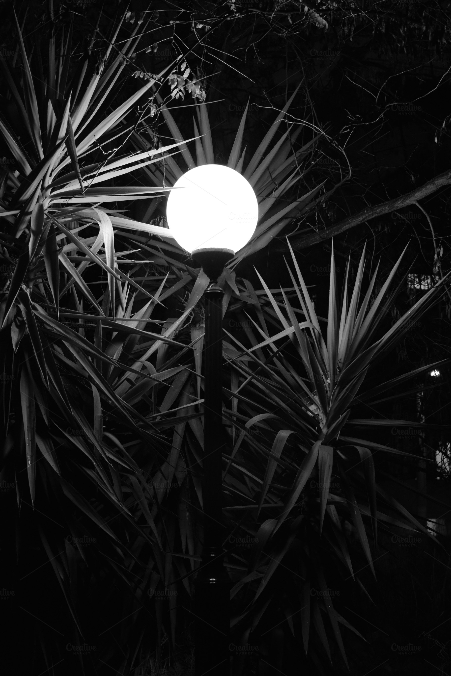 Street Light Plants Night High Quality Nature Stock Photos