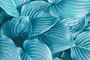 Turquoise plant background.