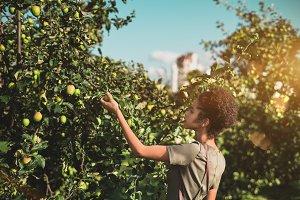 Black girl picking apple from tree