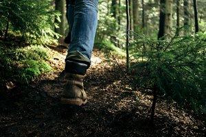 traveler walking in sunny forest