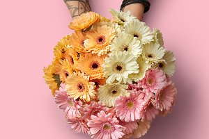 Beautiful bouquet of different fresh gerberas in the hands of a girl on a pink background
