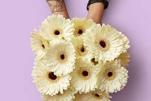 Fresh bouquet of white gerberas in female hands with a tattoo on a pink background