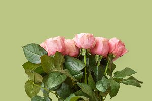 Fresh beautiful bouquet of pink roses on a green background