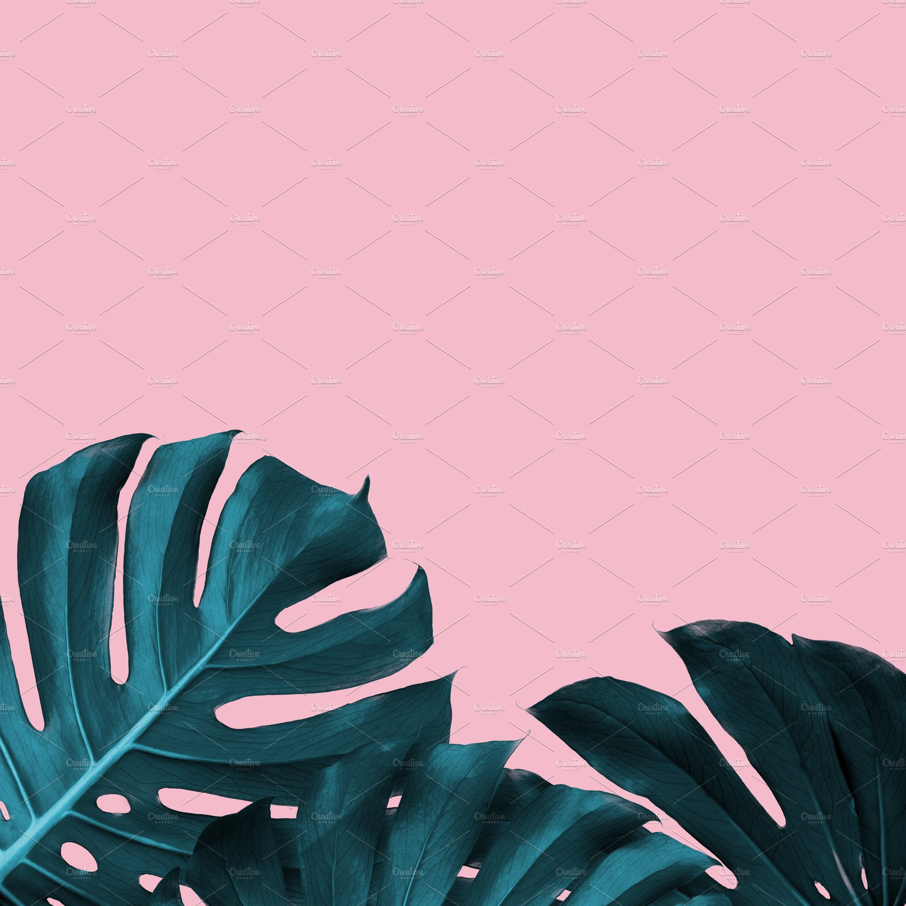 Tropical Leaves Of Monstera On A Pink Duotone Background High Quality Nature Stock Photos Creative Market 10 exotic foliage and leaves digital scrapbook paper pack in trendy tropical style papers in black, green, pink. tropical leaves of monstera on a pink duotone background