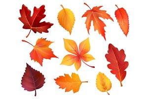 Autumn foliage leaf icons of vector falling leaves