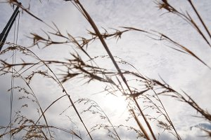 Blue sky through dry grass.