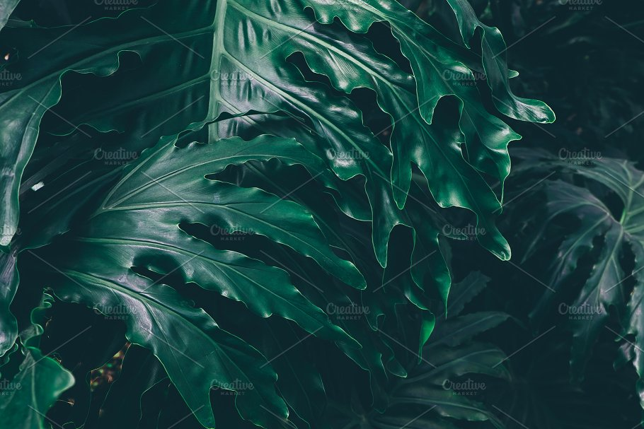 Dark Green Tropical Leaves High Quality Nature Stock Photos Creative Market Would you like to change the currency to pounds (£)? dark green tropical leaves