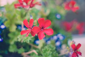 Independence Day Floral