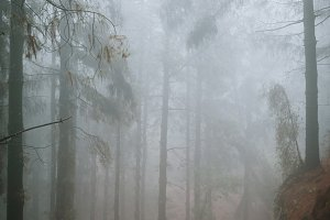 Road in a mysterious foggy pine forest. Rainy and misty weather near Cova crater on Santo Antao Island, Cape Verde