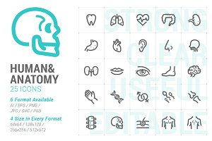 Human & Anatomy Mini Icon