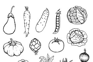 Hand Drawn Organic Vegetables Set