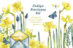 Indigo narsissus set