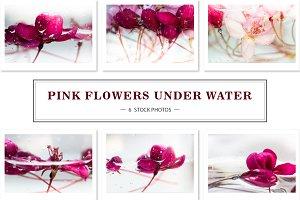 Pink flowers under water