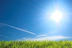 Fresh green grass on sunny sky