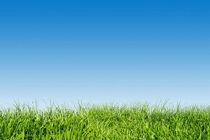 Green grass on blue clear sky