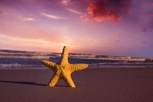 Starfish on summer beach at sunset