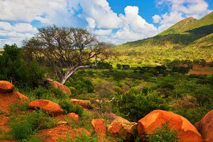 Bush and savanna landscape in Africa