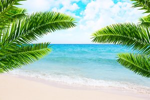 Tropical beach and palm trees.