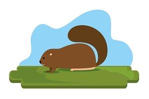 beaver canadian animal scene