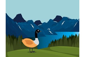 canadian landscape with duck scene