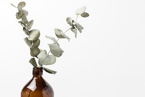 Stock Photo Dried Eucalyptus in Vase