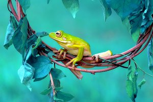 Frog on a Branch of a Leaf