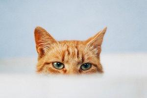 Ginger cat eyes peeking through