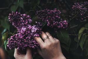Hands of a girl and lilacs
