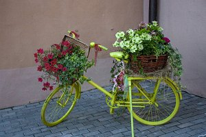 Bicycle - flower bed