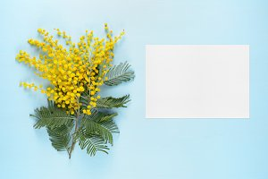 Mimosa and blank greeting card