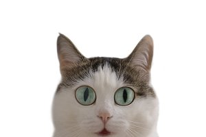 funny cat meme pic with surprise question expression