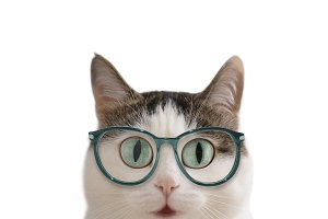 blue eyed funny cat in eye wear sight correction glasses close up photo