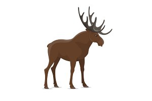 Elk moose vector wild animal isolated icon