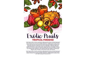 Vector fruits exotic tropical fruit sketch poster