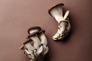 Oyster mushrooms on brown background