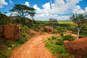 Savanna landscape in Africa