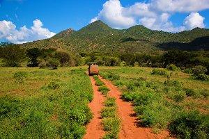 Savanna landscape in Kenya, Africa