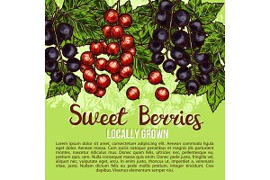 Natural fresh sweet berries sketch vector poster