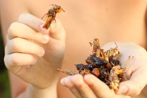 asian cuisine deish - silkworm bug beetle grasshopper mixture roasted insects