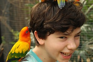teenager smiling boy in asian zoo with ara parrots on his head