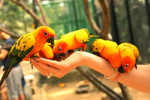ara parrots couple sit on human hand