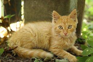 red hair kitten lay on ground on summer garden