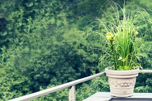 Green decorative plants on balcony