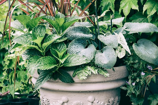 Ornamental plants in pot on balcony