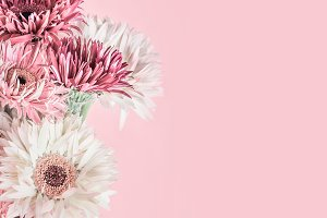 Pastel pink floral background