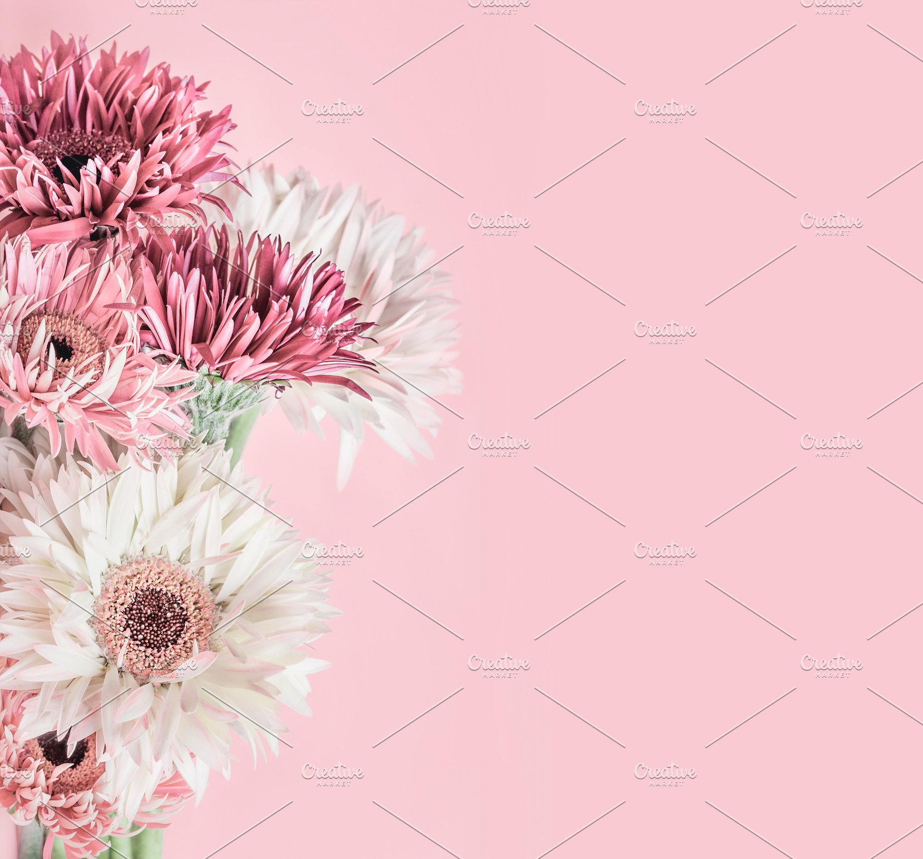 Pastel Pink Floral Background High Quality Abstract Stock Photos