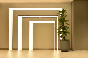 Empty room with tree pot and lights, interior design